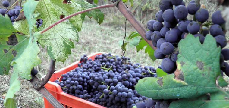 Piemonte: il vino sempre più protagonista