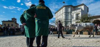 Bue Grasso: la nobiltà della carne in scena a Moncalvo