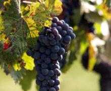 Incoraggianti dati dei vini del Monferrato, diminuiscono le giacenze e bene l'imbottigliamento