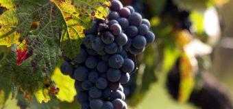 Collaborazione del Consorzio Barbera D'Asti con la Guida Vini buoni d'Italia