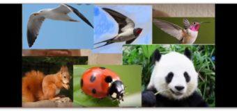 Asti, aperte le iscrizioni on line per il prossimo anno educativo dei nidi d'infanzia