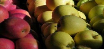 Coldiretti Cuneo: cresciute le vendite della Mela rossa Igp della Provincia