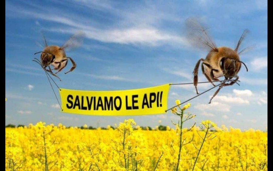 Per la salvaguardia delle api attenzione all'uso dei prodotti fitosanitari