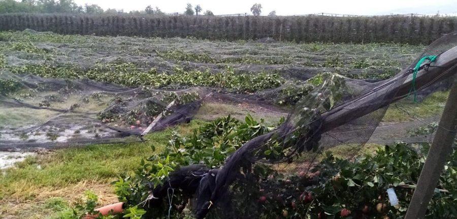 Grandine e maltempo fra Saluzzo, Fossano e Dogliani, con danni alle colture