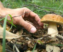 Raccolta dei funghi, le regole nella Regione Piemonte