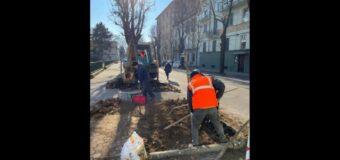 Asti, cento nuove piante per le strade della città