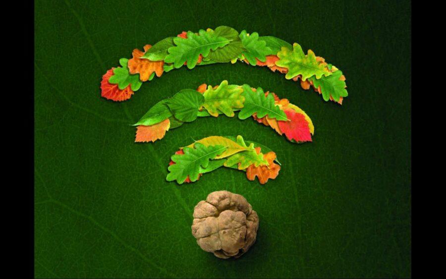 """Alba, """"Connessi con la natura"""", questo il tema della Fiera internazionale del tartufo bianco"""
