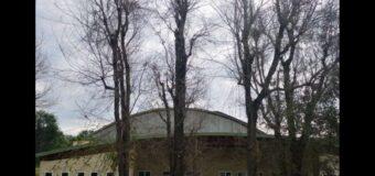 Alba, 16 alberi danneggiati da ignoti sono stati abbattuti e saranno sostituiti